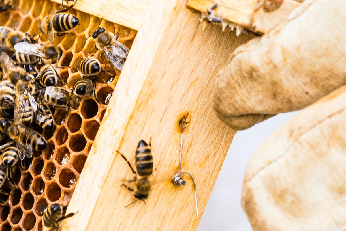 Vous aimez les abeilles ? Nous aussi !
